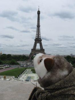 Wiesel in Paris