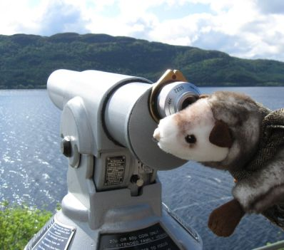 Ausguck: Wiesel hält Ausschau am Loch Ness.