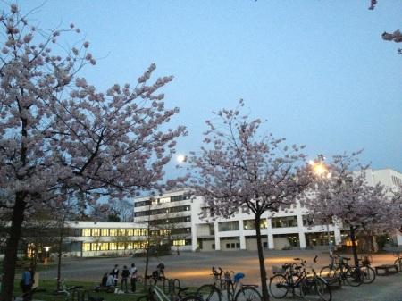 Vollmond über den blühenden Kirschbäumen auf dem Campus der Uni Göttingen