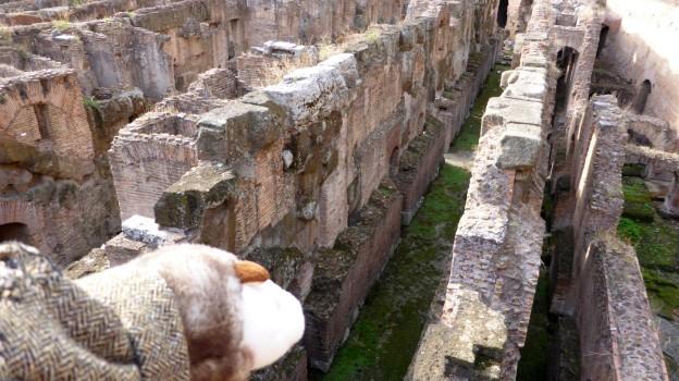 Das Wiesel guckt traurig ins Hypogäum, in dem es so gerne Gladiatorenbestie sein wollte.