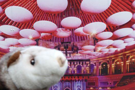 Das Wiesel tut so, als wäre es in der Royal Albert Hall.