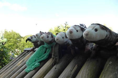 Participants: Nanderez Wiesel, Unnamed Weasel, Wieselita, traveling weasel, Weasellady, Wunderbares Wiesel.