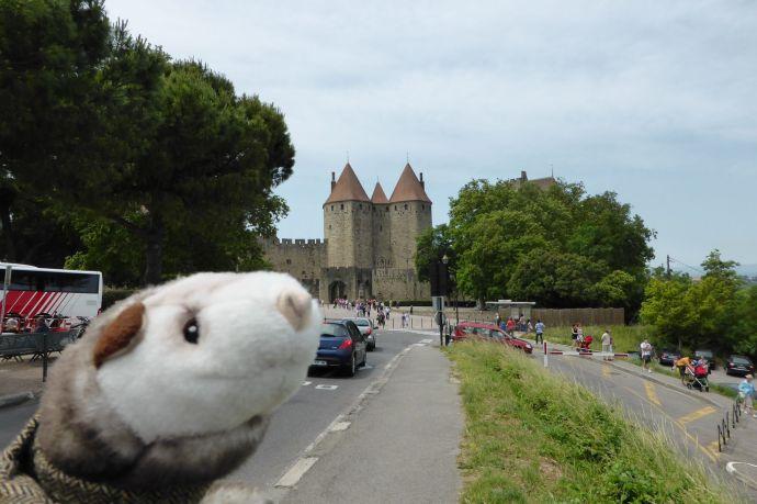 Wiesel vor Carcassonne.