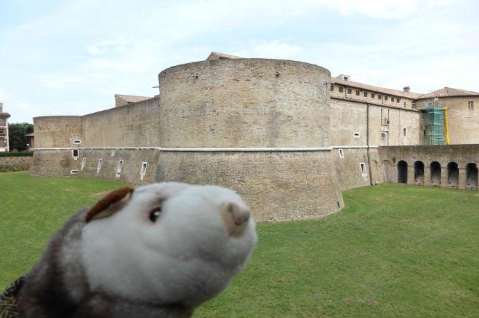 Auch wenn wir nicht in die Rocca Constanza dürfen, das Wiesel hat trotzdem seinen Spaß.