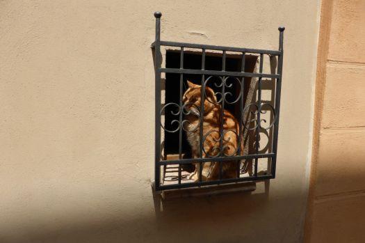Das meistfotografierte Motiv an diesem Tag: Katze hinter Gittern.