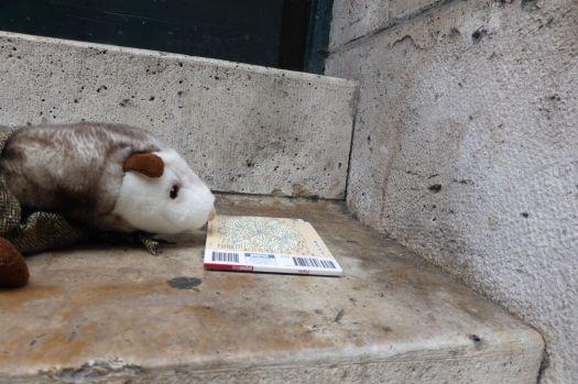 Das Wiesel studiert an der Sorbonne.  (Eine u-Bahn-Karte. Auf den Treppenstufen des Hauptgebäudes.)