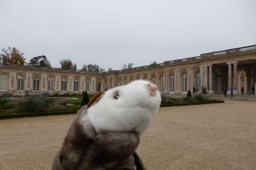 Das Wiesel versucht die Nase genauso hoch zu tragen wie einst Marie-Antoinette.