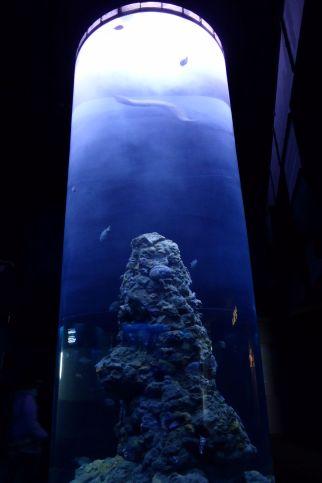 In der Wassersäule schwimmen kleine Fische herum-