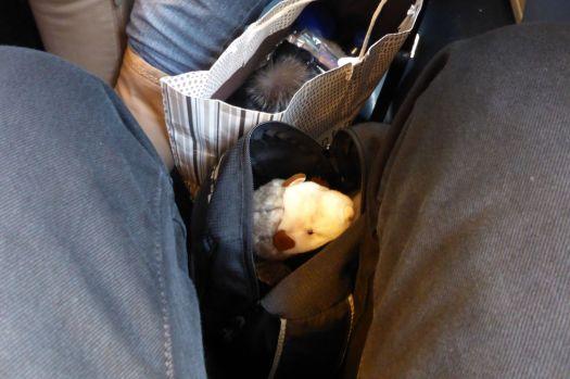 Das Wiesel lugt aus dem Rucksack hervor und beobachtet den Puschel in der Tasche daneben.