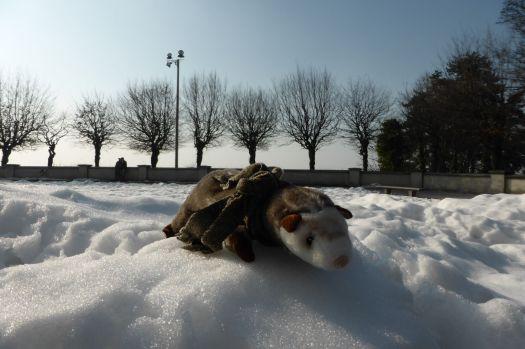 Das Wiesel mag das Spielen im Schnee.