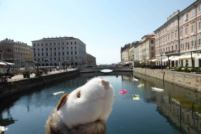 Ein Kanal voller... Luftmatrazen? Das Wiesel will sofort eine Runde Sonnenbaden und wird sauer, als ich weiter will.