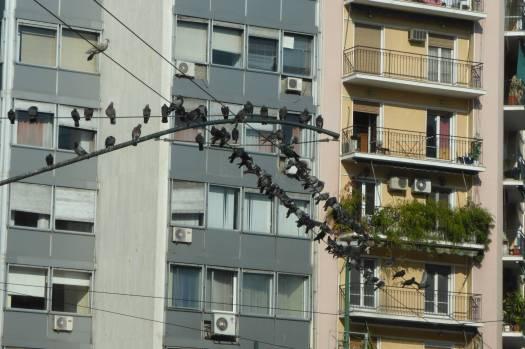 Es ist voller Tauben!