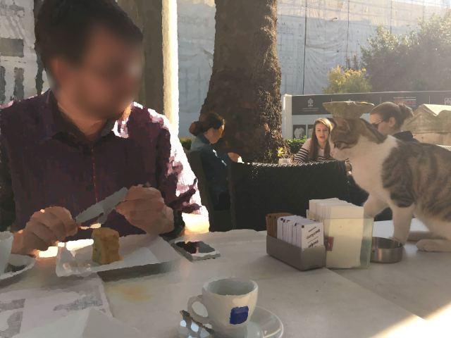 Die Katze mag Kuchen.