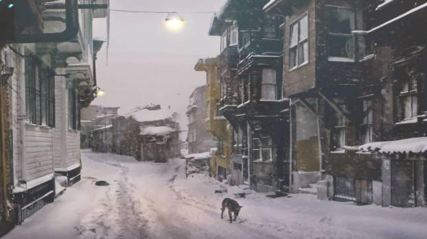 Wolf und Winter in der Holzhäusschenstraße.