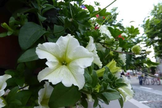 Blumen, überall!