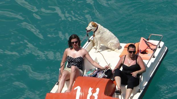 Das ist ja ein dicker Hund! Das Haustier lässt sich durch die Gegend fahren, die Menschen dürfen schwitzen.